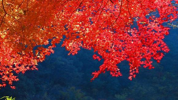 autumnal_leaves.jpg